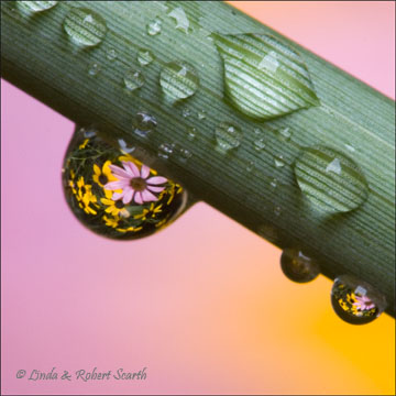 Dewdrop Refraction