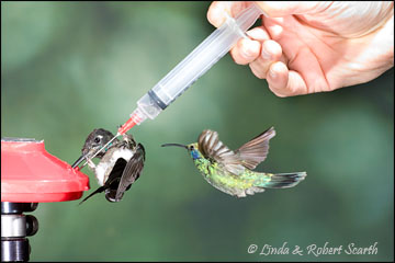 Eager Hummingbirds